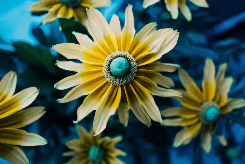 Svo cvijeće budućnosti je u današnjem sjemenu.